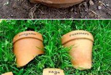 Grönsaksträdgårdar