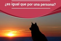 Mascotas  Preciosas / Salud,amor, alimentación, ropa, recreación, juegos.
