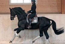 Black horse- english