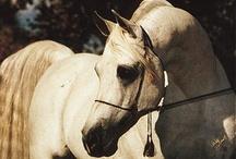 Equine /   / by Jordan Hamilton