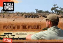 African Conservation Experience / A general insight into ACE activities and volunteers.