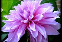 Flowers / by Jennifer Rhee