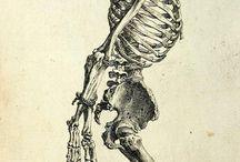 Macabre anatomy in death
