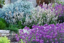 Falusi kertek
