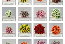 Primavara / Flori de primavara  https://www.orasulflorilor.ro/