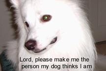 Beau - My Best Furry Friend R.I.P. / American Eskimo Dog Pet Eskies / by Pat Curry