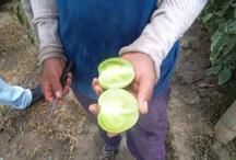 agroinsumos organicos / agricultura