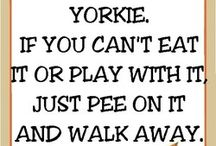 Yorkie/Poms Quotes♡ / Yorkshire terriërs quotes