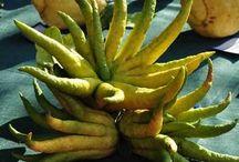 marmellate frutti antichi