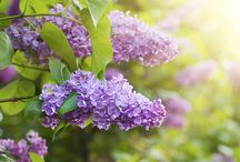 Trees and Shrubs for Hummingbirds / Try adding some flowering trees  and shrubs to your home garden to attract hummingbirds.
