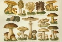 mmmmm meadows / images related to mushrooms,