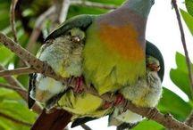 oiseau avec petit