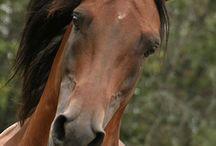 Horses / by Drew