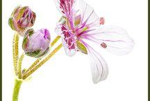 Pasión de jardinero / Jardinería, Flores, Botánica,
