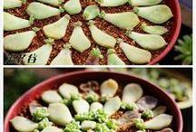 Bitkiler