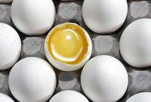 egg recipies