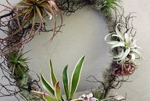 air plant tips and display