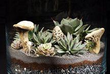 Desert terrariums