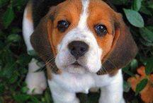Dog of my life