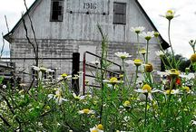 Farm Life / Barns and farm life