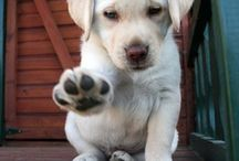AWW how cute! / Dogs, cats, and all things AWW