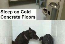 shelter animals