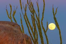 Fly Me To The Moon / by Michele Caine