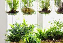 Planter i huset