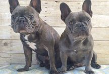 PR Canine Companions