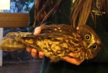 Let's Talk Birds NZ Native Birds / New Zealand Native Birds - beautiful photos of birds native to NZ