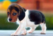 DOGS FRIENDS FUR- EVER...!!