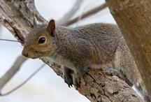 I love Squirrels / by Elizabeth Taylor