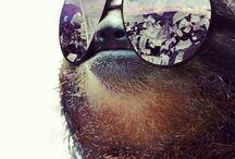 Sloth shizz