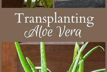 :: LOVING PLANTS ::