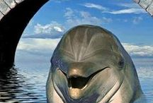 Hermoso delfín cara