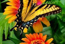 motýli (butterflies)