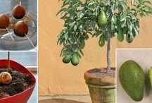 sadzenie