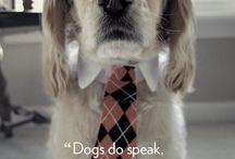 Inspirational / Inspirational Pet Quotes and Stories