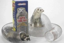 The Top 5 Ferret Toys! / by Ferret.com