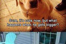 σκύλος κοτόπουλο