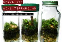 terrariums / by Shawn Smith