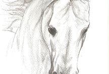 ritratti a matita cavalli