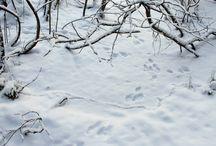 Ilmiö: Talvi
