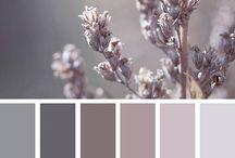 Oda renkleri