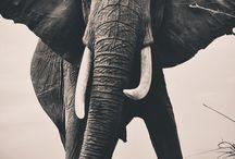 Animals / by Jenni Rotonen