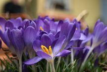 Flowers of the World / Beschränkung von Bildmaterial ausschließlich auf Blumen