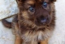 cute dogs