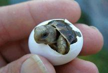 Schildpadden uit ei