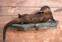 Otters and other legends