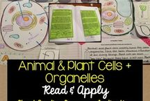 Homeschool: Animal & Plant Cells Unit